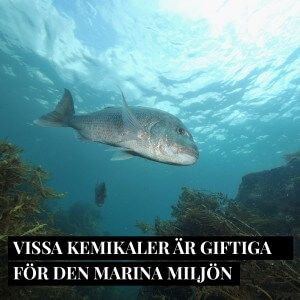 2_FB-solskydd-marina-miljon