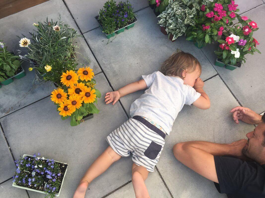 garden center blommor