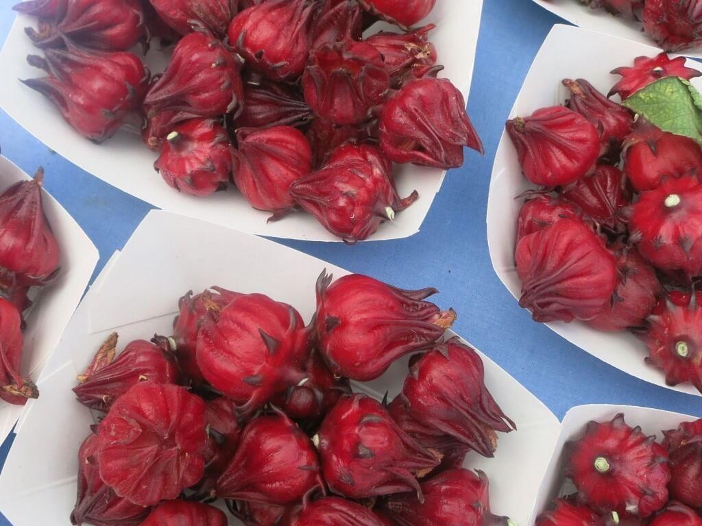 hibiskusblommor